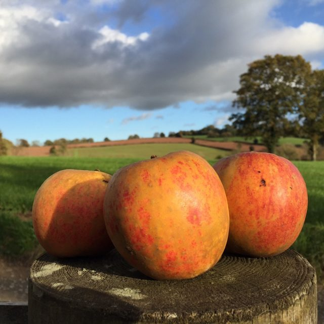 https://discovercider.com/wp-content/uploads/2020/09/LP-apples-6-640x640.jpg
